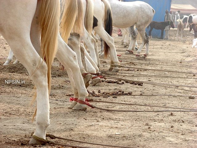 Animal Fair: Horse Fair: Sense of discipline with rear legs