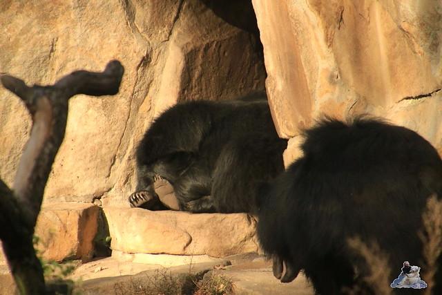 Zoo Berlin 08.11.2015  021
