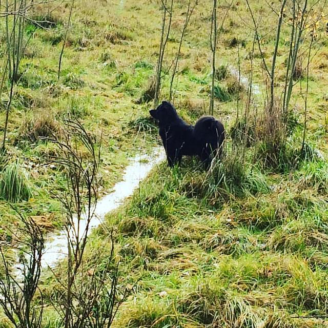 Grassy Cub. 🌿