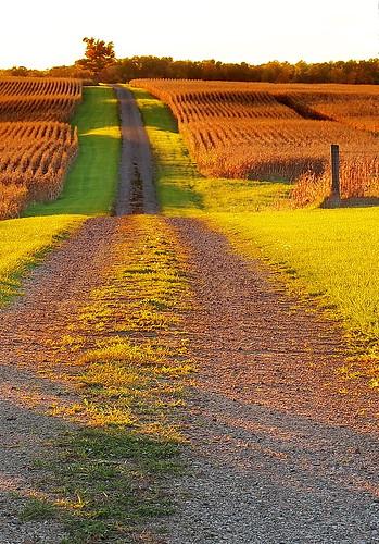 farm lane bentonhighway eatoncounty michigan green sunny