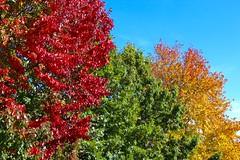 Autumn Rainbow of Color