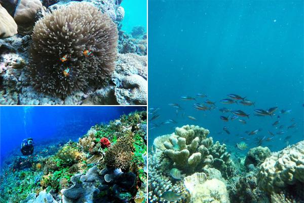 undersea tinabo island