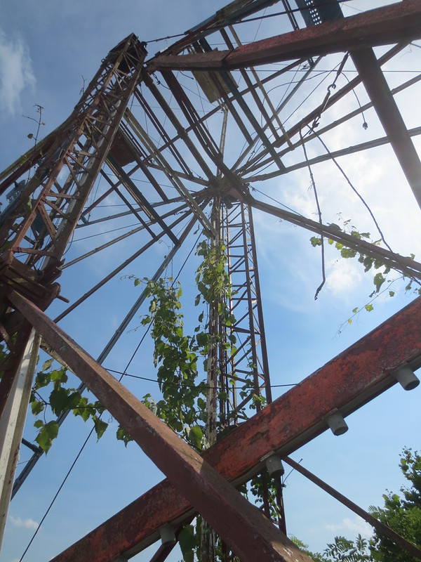 Ferris wheel and vines