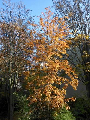 Eberesche im Herbst