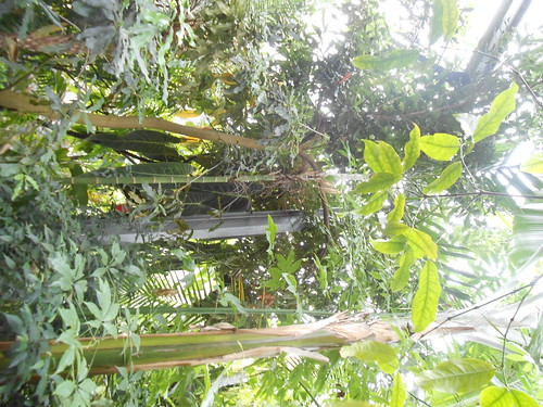 Eckersley Botanic Gardens visit 8