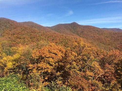 brp 2015 fall craggy gardens craggygardens asheville northcarolina unitedstates us flora