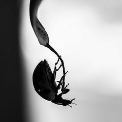Noir&Blanc