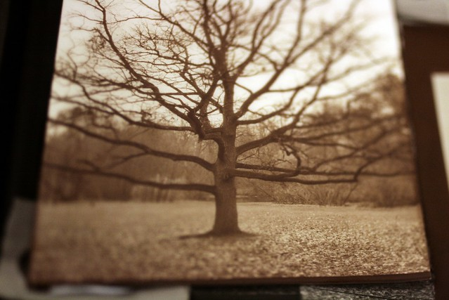 The lone Oak print sepia