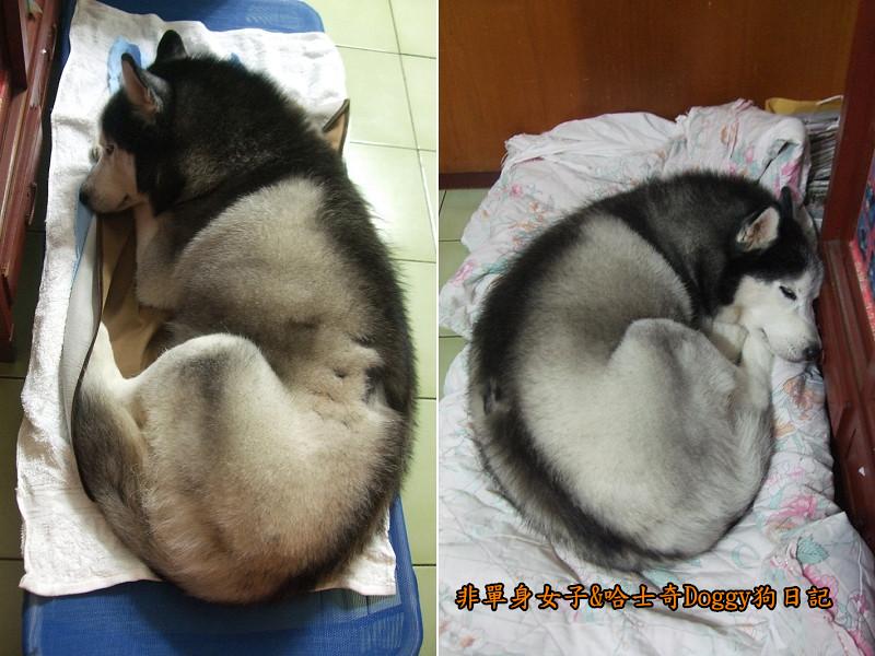 Doggy保暖墊01