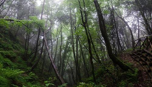 暗い森 by pixabay
