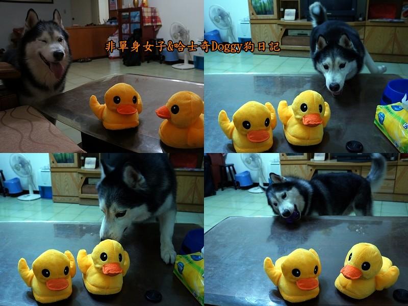 doggy黃色小鴨鞋03