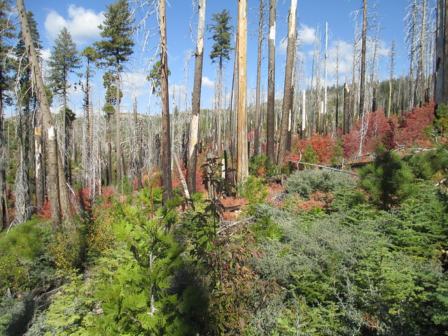 photo of Snag Forest