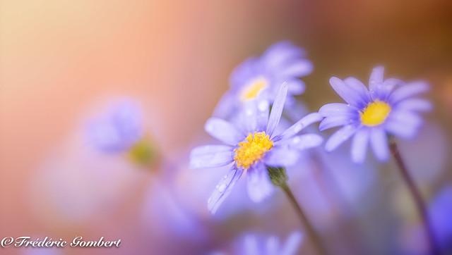 blue light autumn