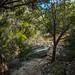 Trail through the Wilderness by MikeInOwasso