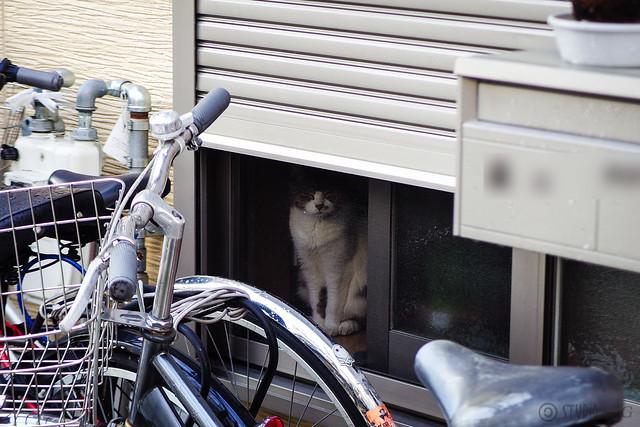 Today's Cat@2015-09-02