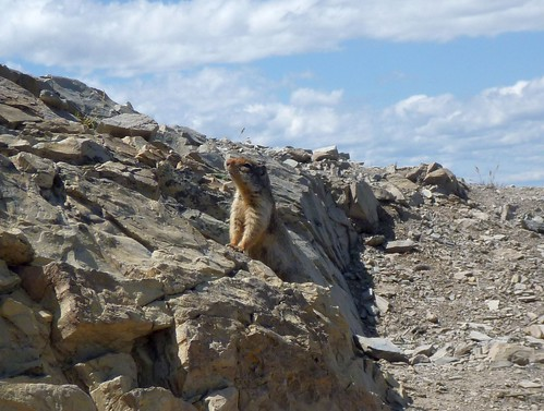 Wildlife on the summit of Mt. Aeneas
