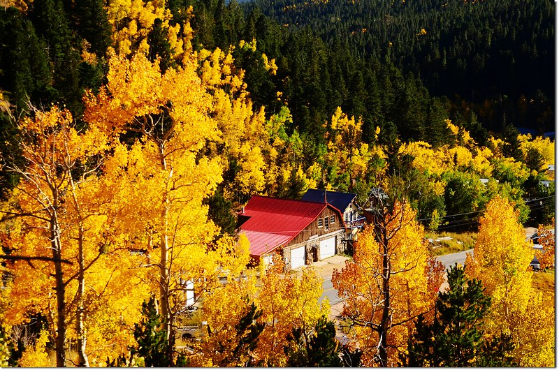 Fall colors by Peak to Peak HWY, Colorado  (9)
