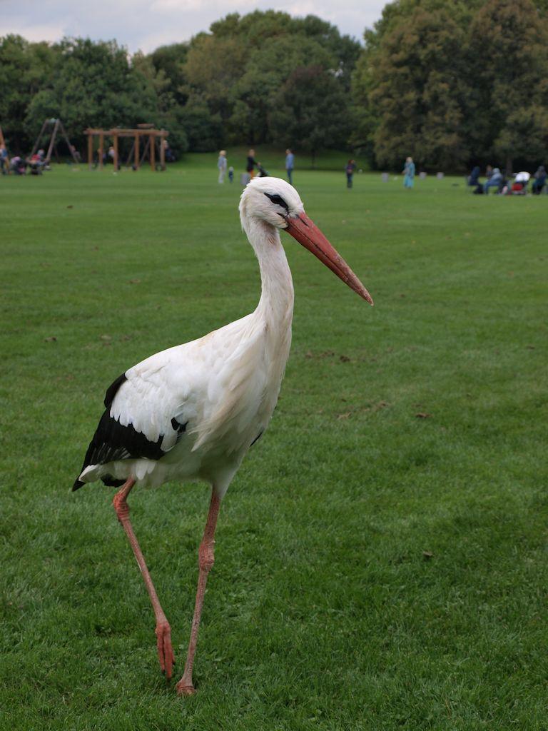 Luisenpark Mannheim: Storch
