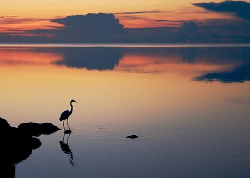 ocean sky seascape reflection bird nature beautiful silhouette clouds sunrise dawn outdoor serene egret greategret