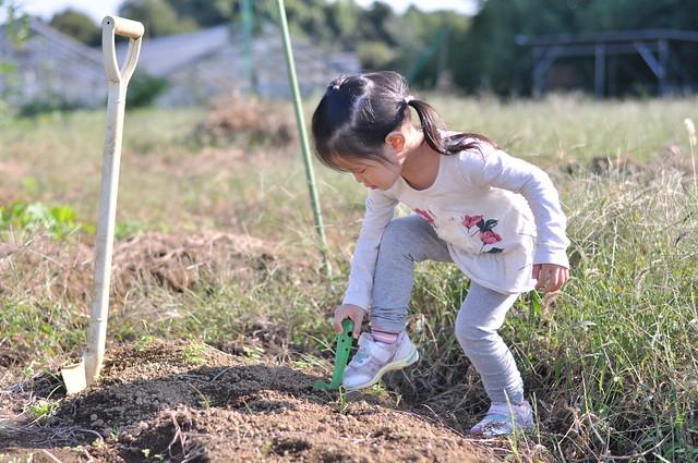 3歳児の耕作