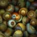 Nuts by Zsaj