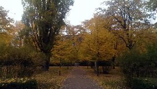 Herbst im Heine-Viertel