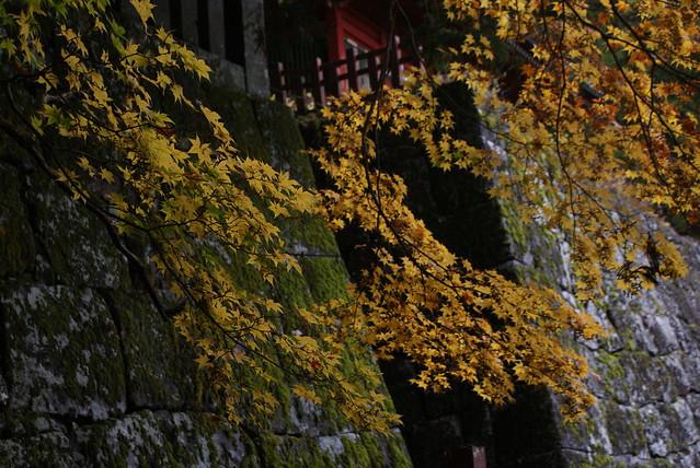 L'automne au Japon ou une explosion de couleurs indescriptibles.
