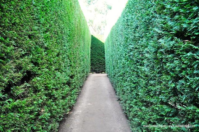 Maze at Enchanted Adventure Garden