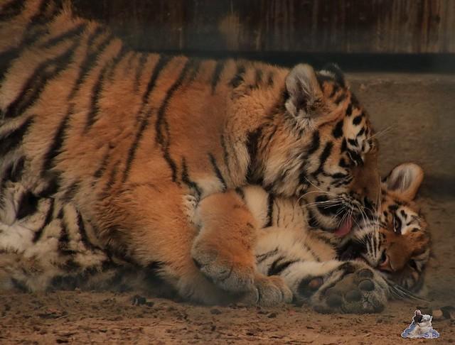 Tierpark Berlin 22.11.2015   066