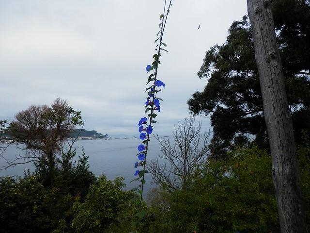 Cable de las flores