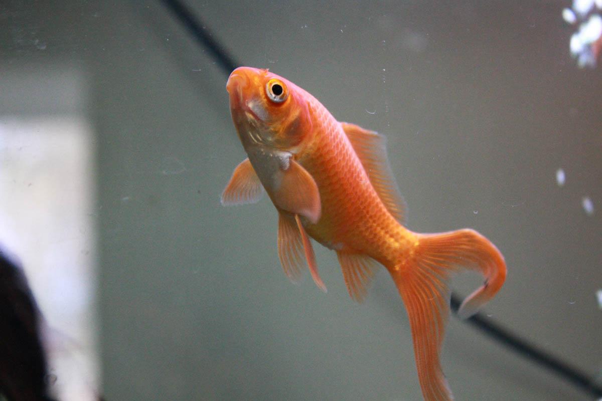 Aquarium de Sam Soul 23458885339_dfcda3f430_o