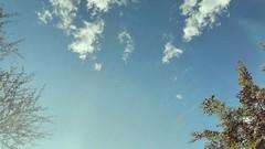 #Wallpaper in the #Park #Sunday #chill #Sky #trees #vscocam