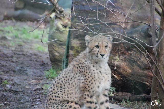 Besuch Zoo Rostock 13.12.2015109