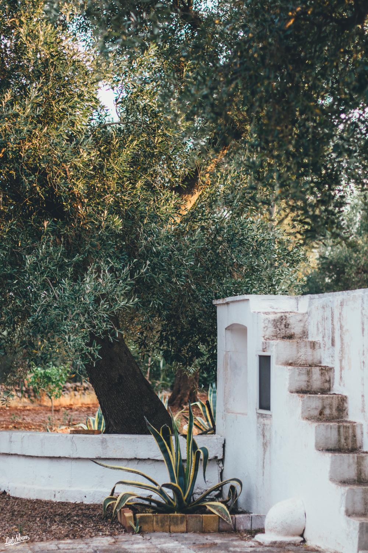 Memoirs of Puglia | Ab Doogh Khiar | Persian Cold Soup with Yoghurt and Herbs | Zuppa Fredda di Yoghurt alla Persiana | Lab Noon-9