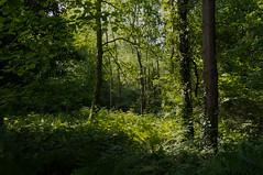 Parc des Sources d'Elle - Photo of Lamberville