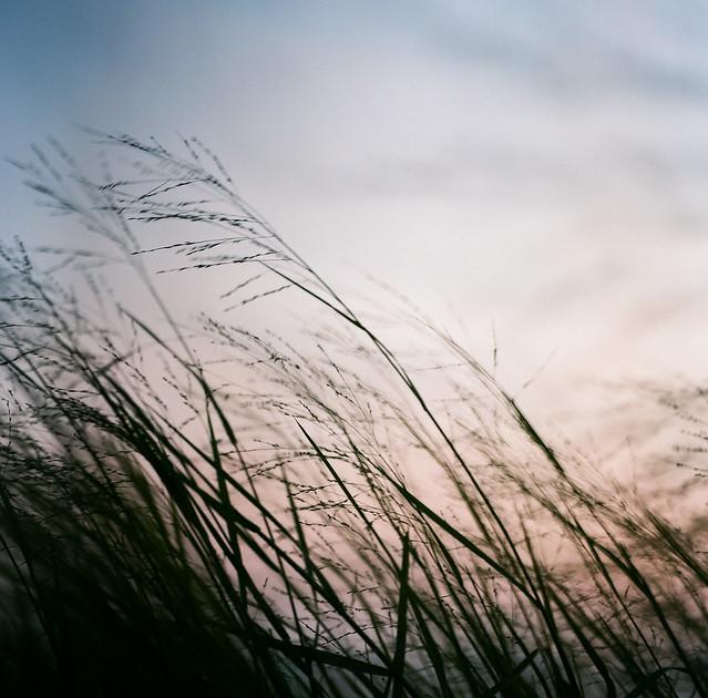 如果風有痕跡,如果感覺有顏色。