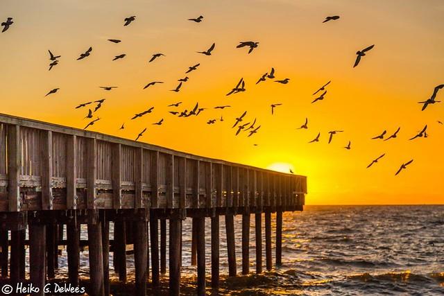 Birds checking out a Buckroe Beach Sunrise
