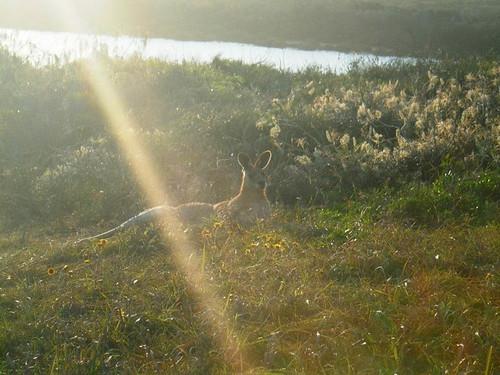 Auch die Kängurus genießen den Sonnenuntergang