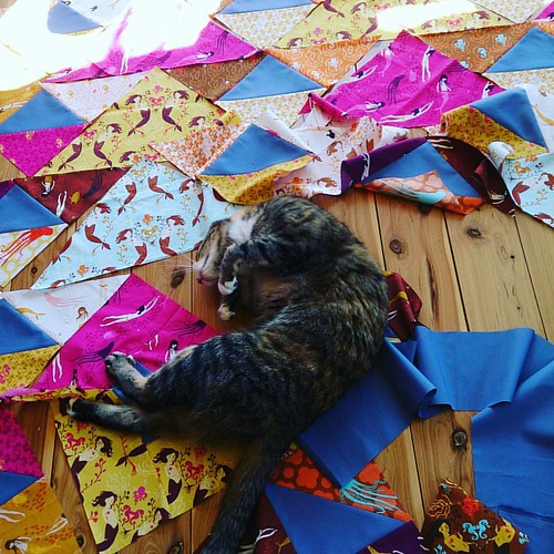 *sigh* #cats #310tomendocino #catsofinstagram #advenchuresofsmokeyandmal