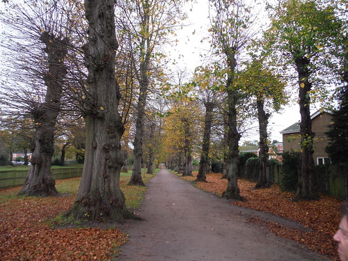 Tree-lined Avenue, Ampthill (II)