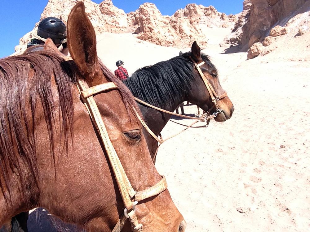 cheval Atacama7