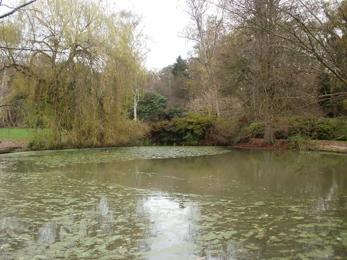 Still Pond Richmond Park 2