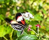 Butterfly in movement with a Flower