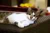 Kitten Oliver