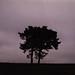 Longstone moor trees by ronet