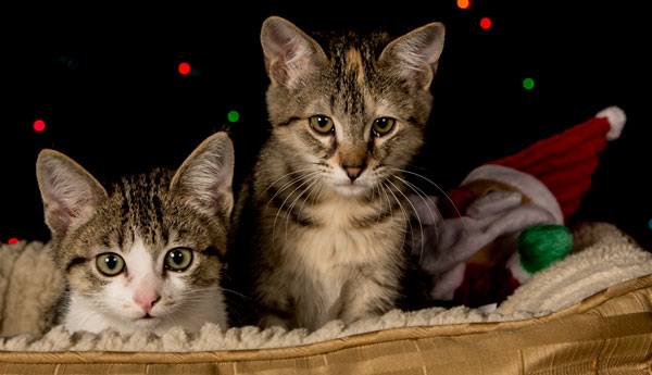 top-10-things-cats-like-about-opening-presents