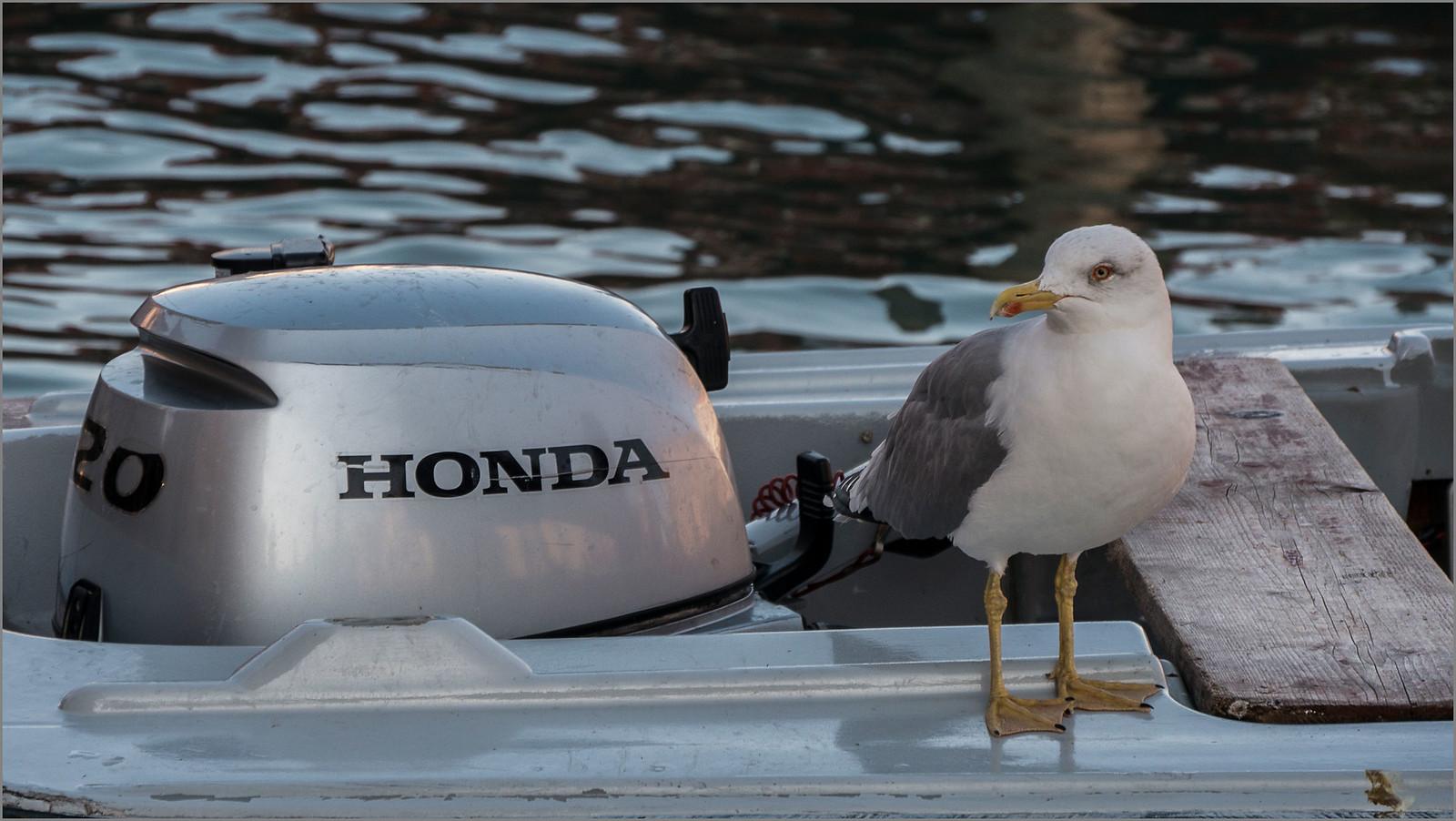 Ich bin Honda-Fan I'm, Panasonic DMC-G5, Lumix G Vario 14-140mm F3.5-5.6 Asph. Power OIS
