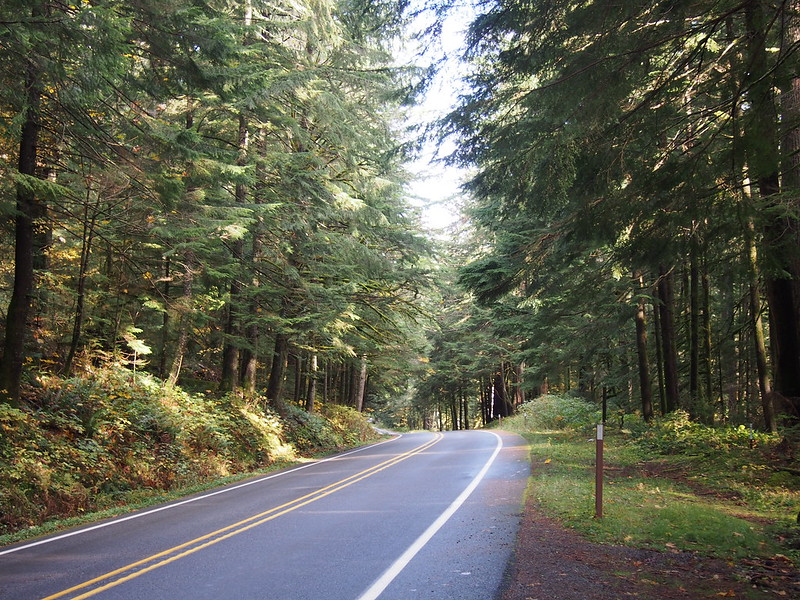 SR-410 in Federation Forest State Park