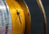 bug on fishing reel