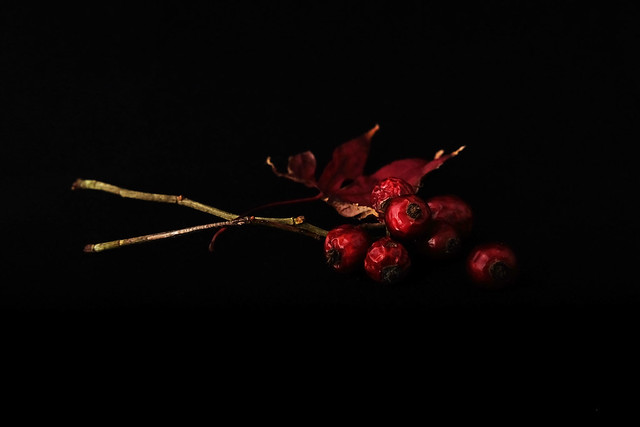 rose hips in the, Fujifilm X-T10, XF35mmF2 R WR